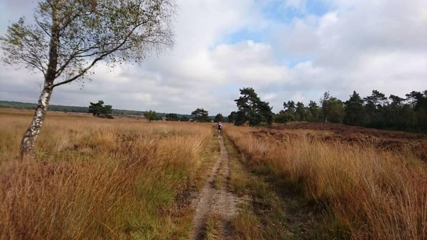 Heideveld